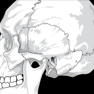 liftarn Human skull  side view  Thumbnail