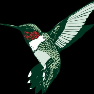 ruby throated hummer Thumbnail