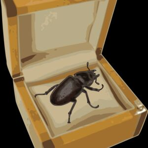 beetle in a box  2  Thumbnail