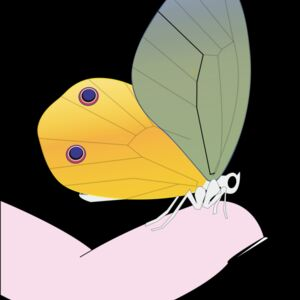 butterfly Thumbnail